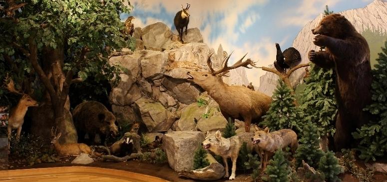 Expoziția de vânătoare
